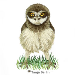 Baby Burrowing Owl Needle Painting