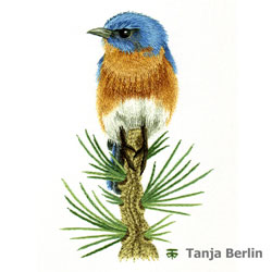 Eastern Blue Bird on Pine Branch Needle Painting