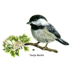 Chickadee on Blossom Branch Needle Painting