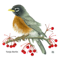 Robin on Berry Branch Needle Painting