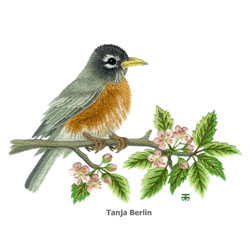 Robin on Blossom Branch Needle Painting