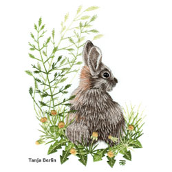 Wild Rabbit Needle Painting