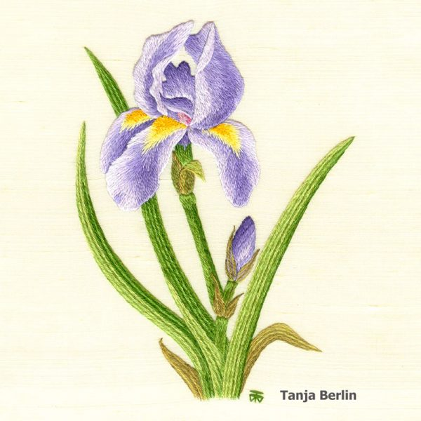 Iris Needle Painting