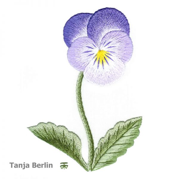 Clear Purple Pansy