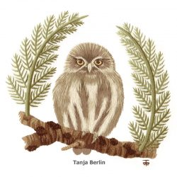 Pygmy Owl Needle Painting