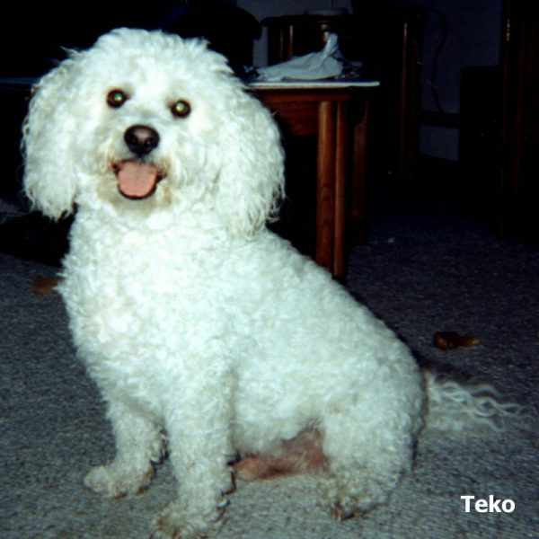 teko-photo-tanja-berlin