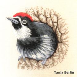 acorn-woodpecker-tanja-berlin4